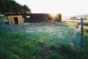 ChickensWideAngle_TrishOdorico(web)
